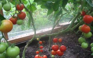 Правильно посадить помидоры дома