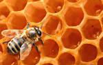 Как правильно пить мед натощак