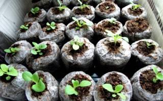 Правильно посадить в таблетки семена