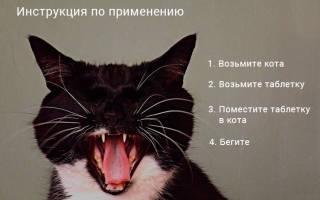 Правильно дать коту лекарство
