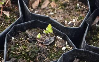 Правильно посадить фруктовое дерево видео